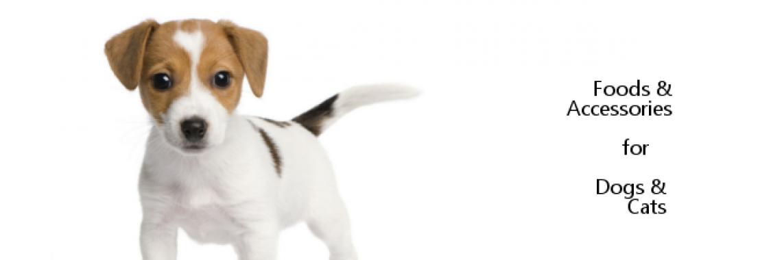 Dog Intro